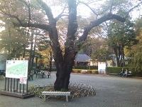 Keitai_097