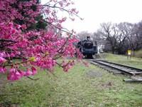 Sakura_004b_2